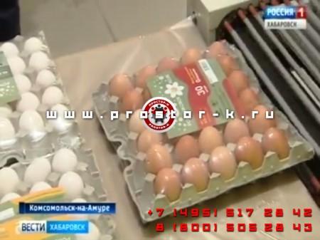 Новый цех Комсомольской птицефабрики